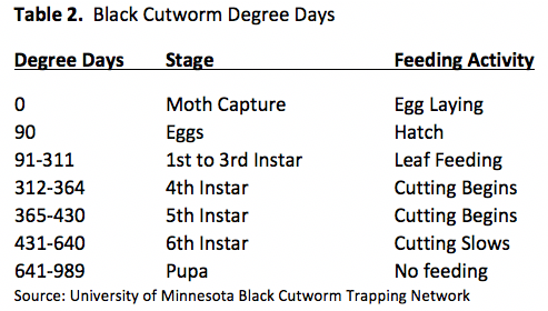 black cutworm degree days