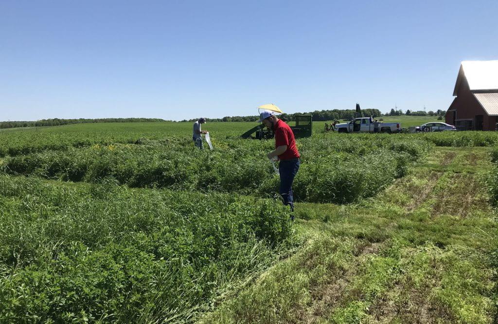 Man in alfalfa field