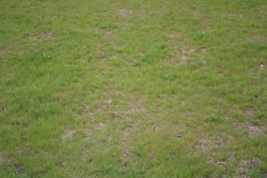front_lawn-struggling (2)