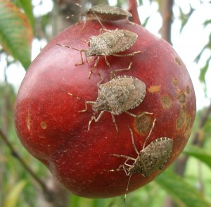Pests are ever-present in our orchards and vineyards. Go Back to School for helpful info.