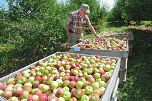 Peter Ten Eyck's passion: sustainably grown apples.