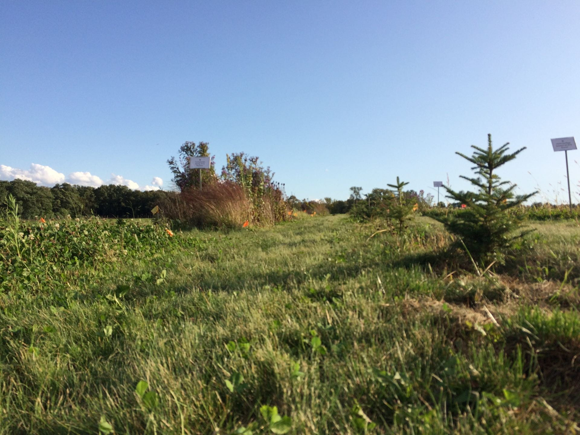 photo shows at least one plot of beneficial habitat plants and part of a row of small evergreens