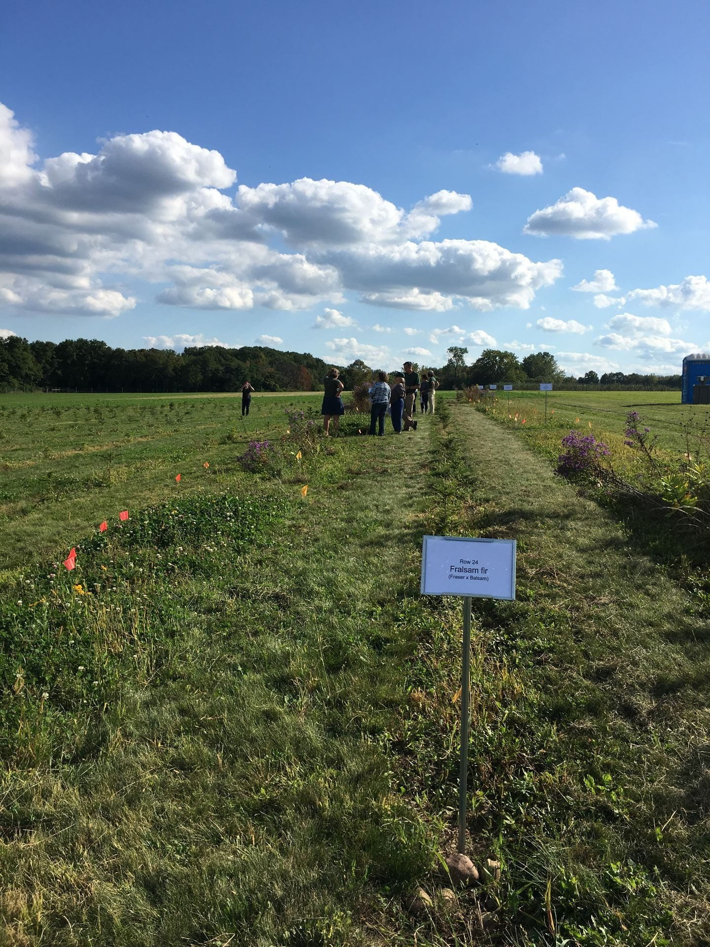 Photo shows rows of small evergreen trees at the NYSIPM research plot at Cornell Agritech Fruit and Vegetable Research Farm