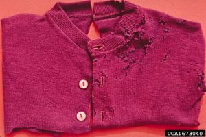 A red cardigan sweater with holes on one side from moth feeding damage.