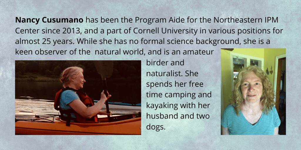 graphic shows two photos of Nancy Cusomano, and her bio: Nancy Cusumano has been the Program Aide for the Northeastern IPM Center, since 2013. Nancy has been at Cornell University in various positions for almost 25 years. While she has no formal science background, she is a keen observer of the natural world and is an amateur birder and naturalist. She spends her free time with her husband and two dogs, camping and kayaking.