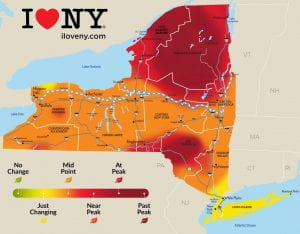 photo of map of NYS with heat map showing the stage of leaf color from Oct. 7-13. Adirondacks and Catskills are at or past peak. Long Island and the lower Hudson Valley are just changing. The rest of NY is at mid-point