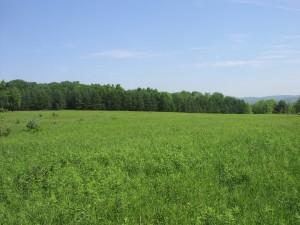 Potential Grassland Site