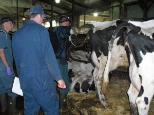 Peter (far right) with the vets on herd health day.