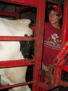 Me preg checking a cow that was just dried off.