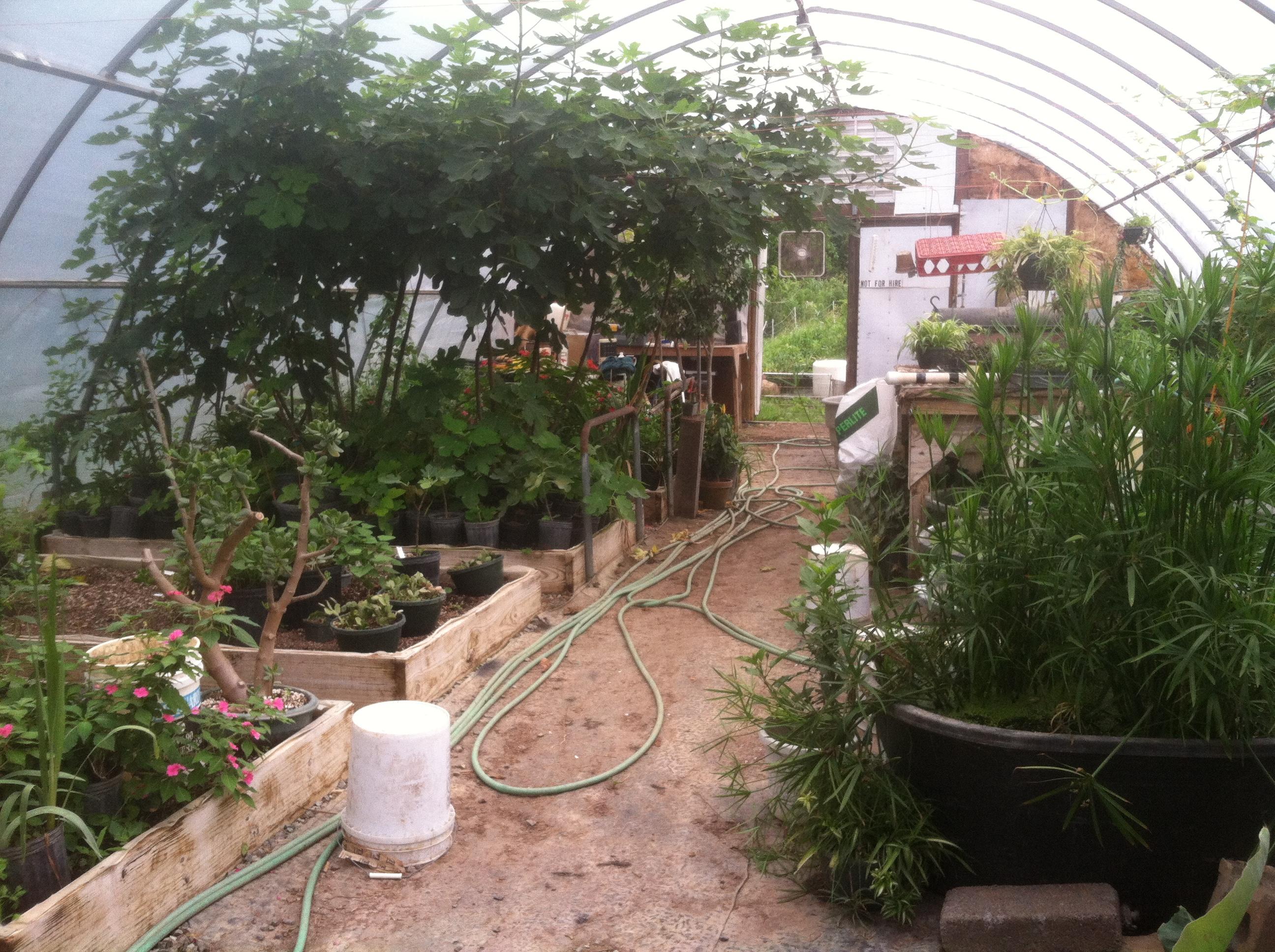 vegetable gardens and cherry ridge farm