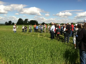 Small Grains Field Day in Aurora, NY