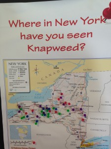 Interactive map Christina and I used for people to show us where they saw knapweed across the state.