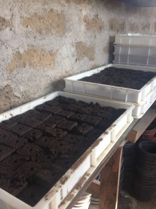 Starting seedlings in soil blocks