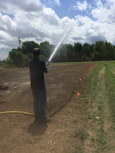 Watering the test plot