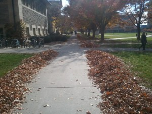 I always wanted to jump in these leaf piles