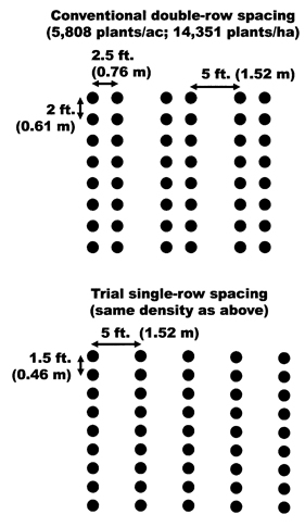 Single-row vs double-row trial