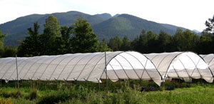 Multi-bay tunnels can cover a large area but can't stand up to winds or snow load.