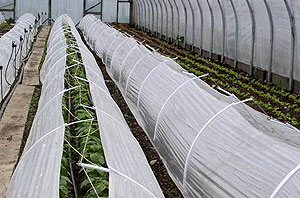 Low tunnels covered with spun row cover provide extra protection for winter crops inside high tunnels.
