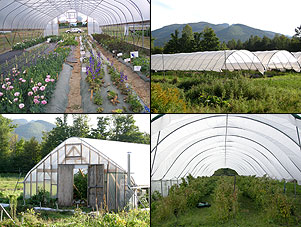 Clockwise from upper right, cut flowers in a gothic high tunnel, multi-bay tunnels, raspberries in a hoop house with straight sidewalls, and tomatoes in a gothic tunnel.