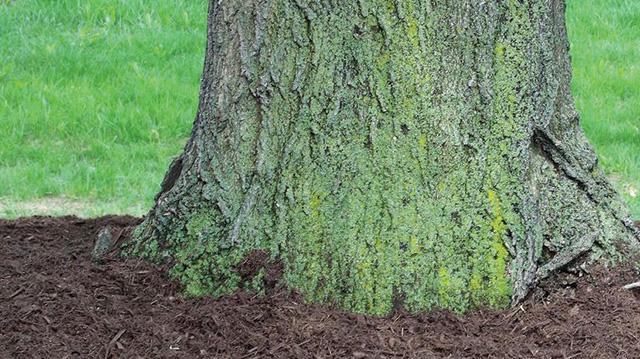organic-mulchesx640