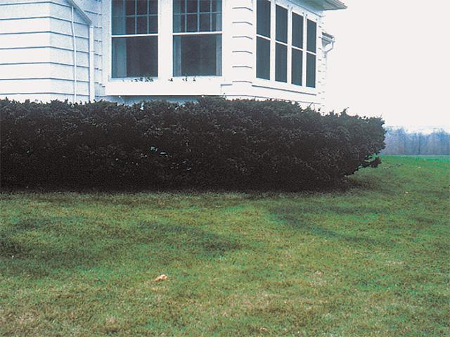 lawn-care-29
