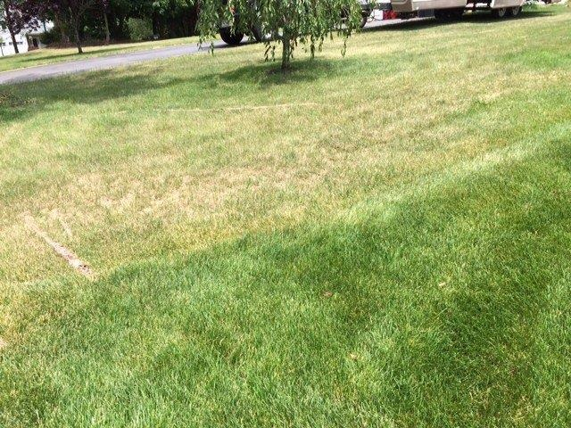 Daily watering resulted in the drought-stressed lawn at the top of this picture. Compare it with the next-door neighbor's healthy lawn at the bottom, which receives one-inch of water just once a week.