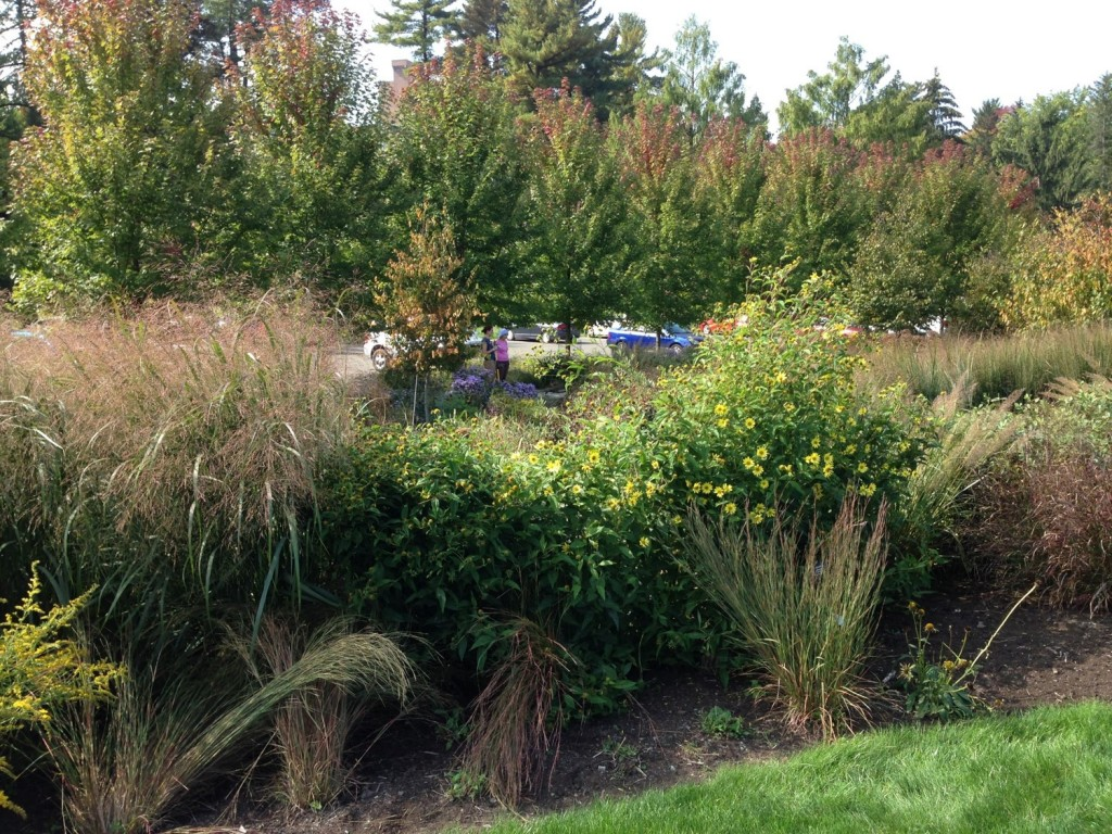 Garden buffers like this one at Cornell Plantations in Ithaca can be used to filter polluted run off from parking lots.