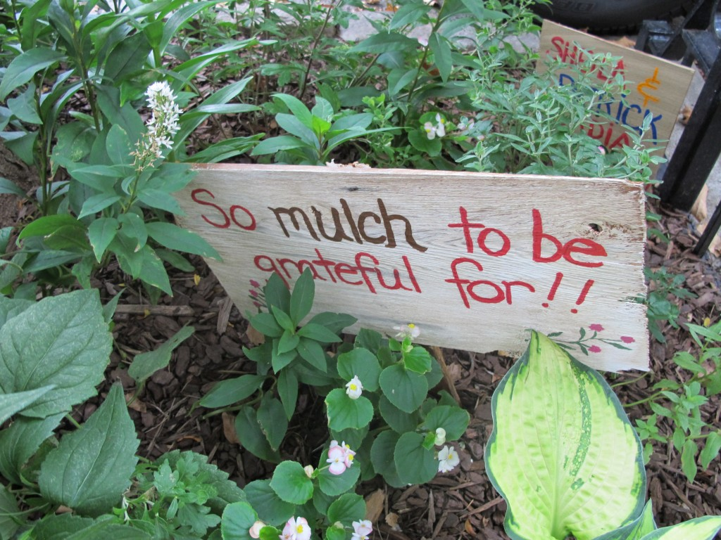 Using mulch is key to waterwise gardening and healthier plants. Photo c Robin Simmen