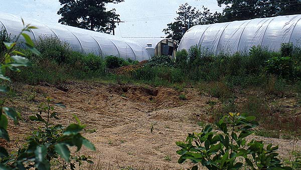 An experimental fruit production orchard was established at Coonamessett Farm, East Falmouth, Mass., in 1996 as a collaborative project lead by Cape Cod Cooperative Extension. It was planted in a sandy borrow-pit unsuited to other crops.