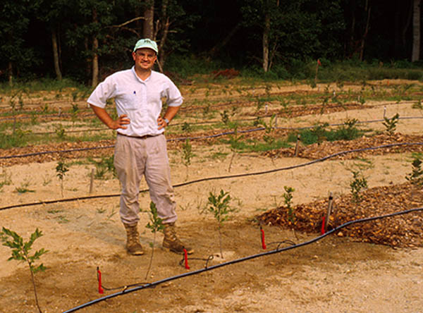 Rick Uva, project manager, at the experimental orchard at Coonamessett Farm in 1997. Note the pattern of moist soil from the drip irrigation.