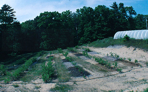 Experimental treatments of mulch, fertilizer, and irrigation at Coonamessett Farm in 1997.
