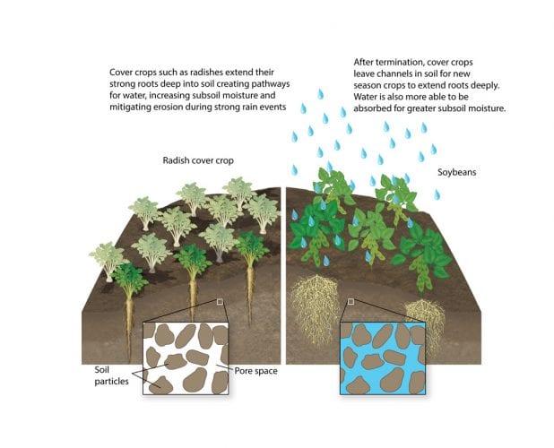 Soil compaction mitigation
