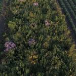 prairie strips in rowcrops