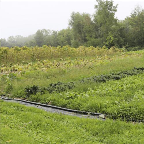 Muddy Fingers Farm - deep composting case study