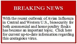 Avian Influenza Button