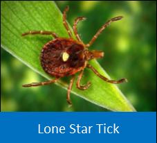 Lone Star Tick