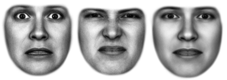 "These are modeled expressions for fear, disgust and average (average of all expressions, so it's not technically ""neutral""). - provided"