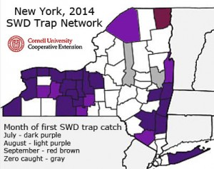 First trap catch distribution for spotted wing Drosophila in the 2014 NY Monitoring Network