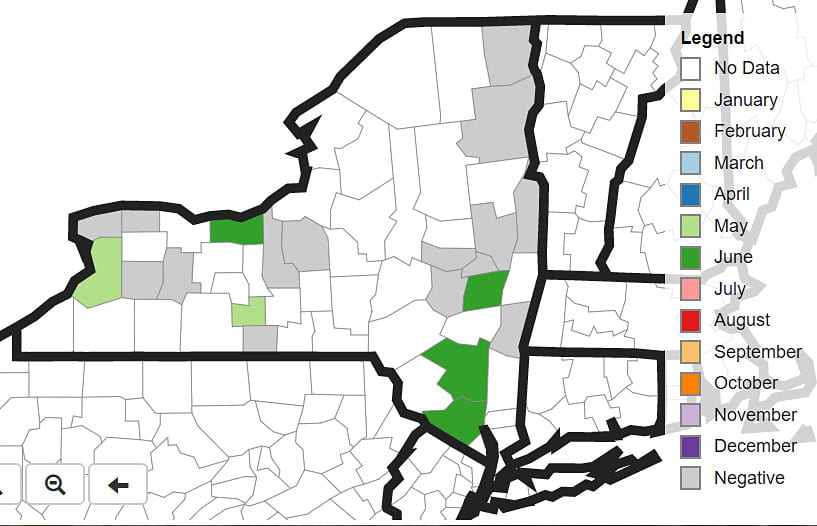 SWD distribution map for NY, June 8, 2019.