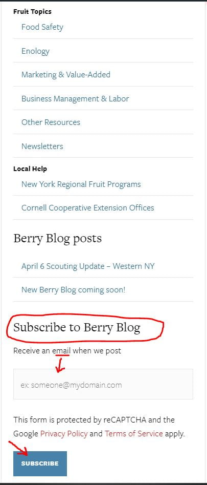 A screen shot showing the subscribe area of the Berry Blog page.