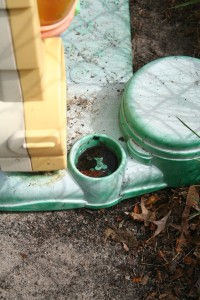 Plastic playsets can have small chambers that serve nicely as a mosquito breeding site.