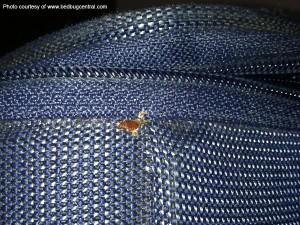 BedBugSuitcase_lg from bedbugcentral