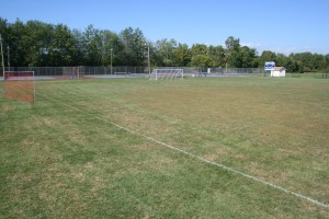 This school soccer field is mostly crabgrass, which starts to decline just as the season begins.