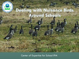 Dealing with Nuisance Birds Around Schools is one of many webinars offered by the EPA Center of Expertise for School IPM.