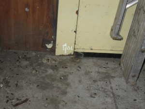 Rodents can chew through thin-bristle brush door sweeps, allowing pest entry.