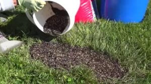 a bucket filled with mix of soil and turf seed being poured into a bare area on a lawn