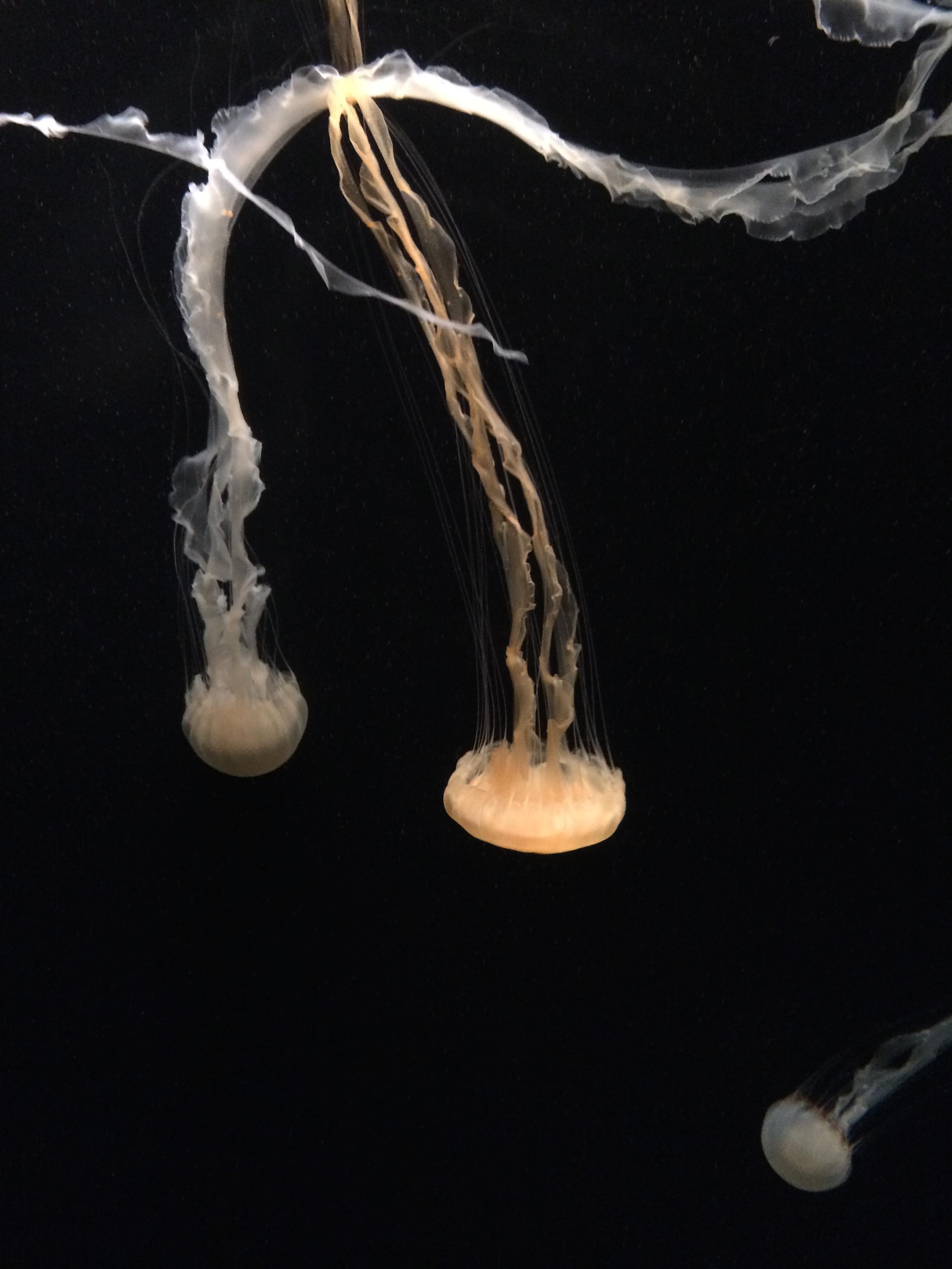 IMG_1031-vuroxs Luxe De Gravier Aquarium Des Idées