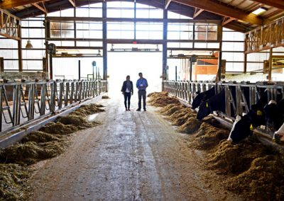 1 Rinny and Blake and the cows in the light of the barn 287-19s68rm