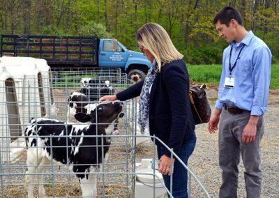 1 Rinny pets calf 306-13l339s