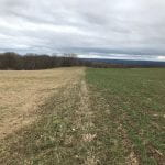 Hay and small grain in early spring 2020
